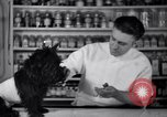 Image of Scottish Terrier New York City USA, 1936, second 36 stock footage video 65675041299