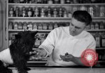Image of Scottish Terrier New York City USA, 1936, second 37 stock footage video 65675041299