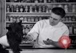 Image of Scottish Terrier New York City USA, 1936, second 38 stock footage video 65675041299