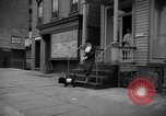 Image of Scottish Terrier New York City USA, 1936, second 51 stock footage video 65675041299