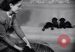 Image of Doberman Pinscher Vancouver British Columbia Canada, 1947, second 6 stock footage video 65675041344