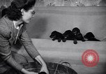 Image of Doberman Pinscher Vancouver British Columbia Canada, 1947, second 10 stock footage video 65675041344