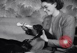 Image of Doberman Pinscher Vancouver British Columbia Canada, 1947, second 40 stock footage video 65675041344