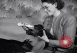 Image of Doberman Pinscher Vancouver British Columbia Canada, 1947, second 41 stock footage video 65675041344