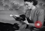 Image of Doberman Pinscher Vancouver British Columbia Canada, 1947, second 42 stock footage video 65675041344