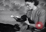 Image of Doberman Pinscher Vancouver British Columbia Canada, 1947, second 43 stock footage video 65675041344