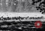 Image of ranchers Cascade Mountains Washington USA, 1933, second 20 stock footage video 65675041408