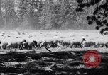 Image of ranchers Cascade Mountains Washington USA, 1933, second 21 stock footage video 65675041408