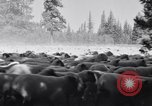 Image of ranchers Cascade Mountains Washington USA, 1933, second 23 stock footage video 65675041408