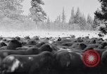 Image of ranchers Cascade Mountains Washington USA, 1933, second 24 stock footage video 65675041408