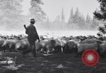 Image of ranchers Cascade Mountains Washington USA, 1933, second 27 stock footage video 65675041408