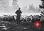 Image of ranchers Cascade Mountains Washington USA, 1933, second 28 stock footage video 65675041408
