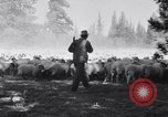 Image of ranchers Cascade Mountains Washington USA, 1933, second 29 stock footage video 65675041408