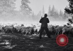 Image of ranchers Cascade Mountains Washington USA, 1933, second 30 stock footage video 65675041408