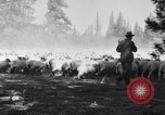 Image of ranchers Cascade Mountains Washington USA, 1933, second 31 stock footage video 65675041408