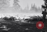 Image of ranchers Cascade Mountains Washington USA, 1933, second 32 stock footage video 65675041408