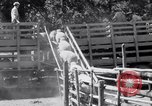 Image of ranchers Cascade Mountains Washington USA, 1933, second 47 stock footage video 65675041408