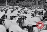 Image of ranchers Cascade Mountains Washington USA, 1933, second 54 stock footage video 65675041408