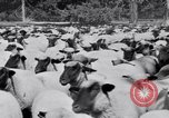 Image of ranchers Cascade Mountains Washington USA, 1933, second 55 stock footage video 65675041408