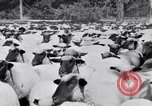 Image of ranchers Cascade Mountains Washington USA, 1933, second 56 stock footage video 65675041408
