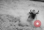 Image of Charros Mexico, 1961, second 54 stock footage video 65675041462