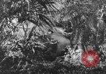 Image of Buna campaign New Guinea, 1943, second 6 stock footage video 65675041520
