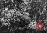 Image of Buna campaign New Guinea, 1943, second 7 stock footage video 65675041520
