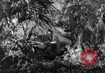 Image of Buna campaign New Guinea, 1943, second 9 stock footage video 65675041520