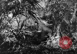 Image of Buna campaign New Guinea, 1943, second 10 stock footage video 65675041520