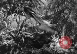 Image of Buna campaign New Guinea, 1943, second 13 stock footage video 65675041520