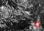 Image of Buna campaign New Guinea, 1943, second 15 stock footage video 65675041520