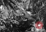 Image of Buna campaign New Guinea, 1943, second 16 stock footage video 65675041520