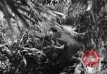 Image of Buna campaign New Guinea, 1943, second 17 stock footage video 65675041520
