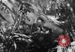 Image of Buna campaign New Guinea, 1943, second 19 stock footage video 65675041520