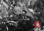 Image of Buna campaign New Guinea, 1943, second 20 stock footage video 65675041520