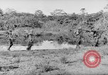Image of Buna campaign New Guinea, 1943, second 60 stock footage video 65675041520
