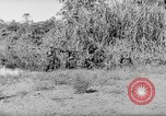Image of Buna campaign New Guinea, 1943, second 62 stock footage video 65675041520