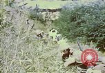 Image of United States troops Inchon Incheon South Korea, 1950, second 14 stock footage video 65675041601