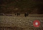 Image of United States Marines in combat during Korean War Hoengsong Korea, 1951, second 16 stock footage video 65675041615