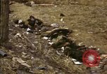 Image of Victims of Hoengsong Massacre in Korean War Hoengsong Korea, 1951, second 20 stock footage video 65675041619