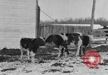 Image of Farm of Crow Native American Indian tribe Montana United States USA, 1921, second 2 stock footage video 65675041807