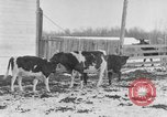 Image of Farm of Crow Native American Indian tribe Montana United States USA, 1921, second 5 stock footage video 65675041807