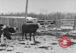 Image of Farm of Crow Native American Indian tribe Montana United States USA, 1921, second 15 stock footage video 65675041807