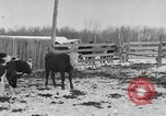 Image of Farm of Crow Native American Indian tribe Montana United States USA, 1921, second 16 stock footage video 65675041807