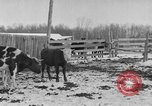 Image of Farm of Crow Native American Indian tribe Montana United States USA, 1921, second 17 stock footage video 65675041807