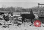 Image of Farm of Crow Native American Indian tribe Montana United States USA, 1921, second 19 stock footage video 65675041807