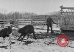 Image of Farm of Crow Native American Indian tribe Montana United States USA, 1921, second 20 stock footage video 65675041807