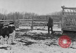Image of Farm of Crow Native American Indian tribe Montana United States USA, 1921, second 21 stock footage video 65675041807