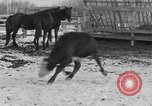 Image of Farm of Crow Native American Indian tribe Montana United States USA, 1921, second 40 stock footage video 65675041807