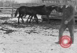 Image of Farm of Crow Native American Indian tribe Montana United States USA, 1921, second 41 stock footage video 65675041807